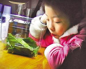 养10条蚕宝宝花2500元 家长:自己吃不好还要操心虫
