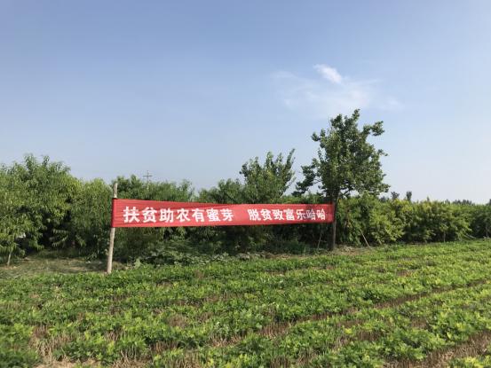 蜜芽与河南省内黄县人民政府达成战略合作 建设扶贫生态基地1748