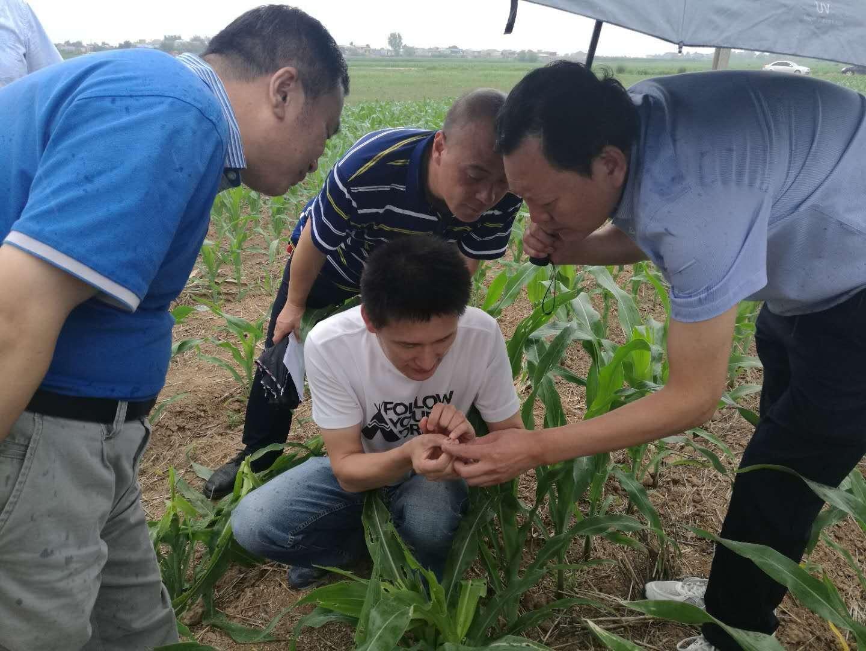 西安市农业农村局督促检查草地贪夜蛾防治工作