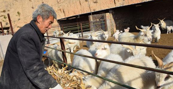 榆林羊肉借助物流配送销往全国 品牌价值提升助力脱贫攻坚