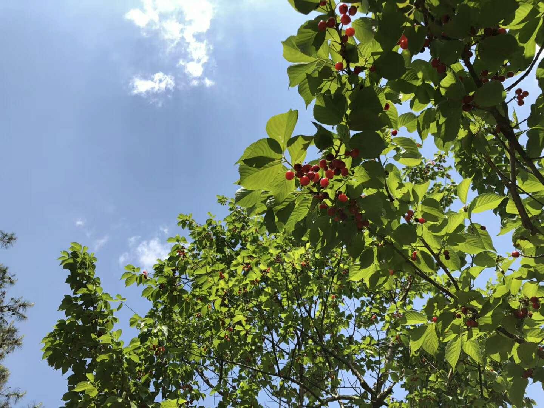 昨日西安38.2℃高温领跑全省 今天局地36~38℃