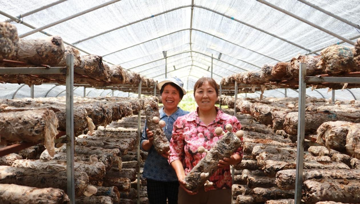 蓝田:大力发展产业扶贫 带动群众稳定增收