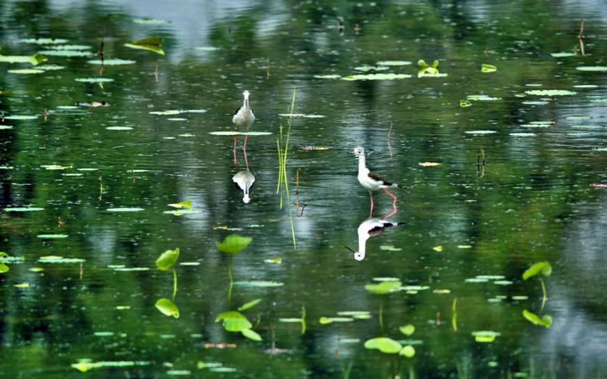 黄河湿地鸟类的守护者,让鸟自由飞翔