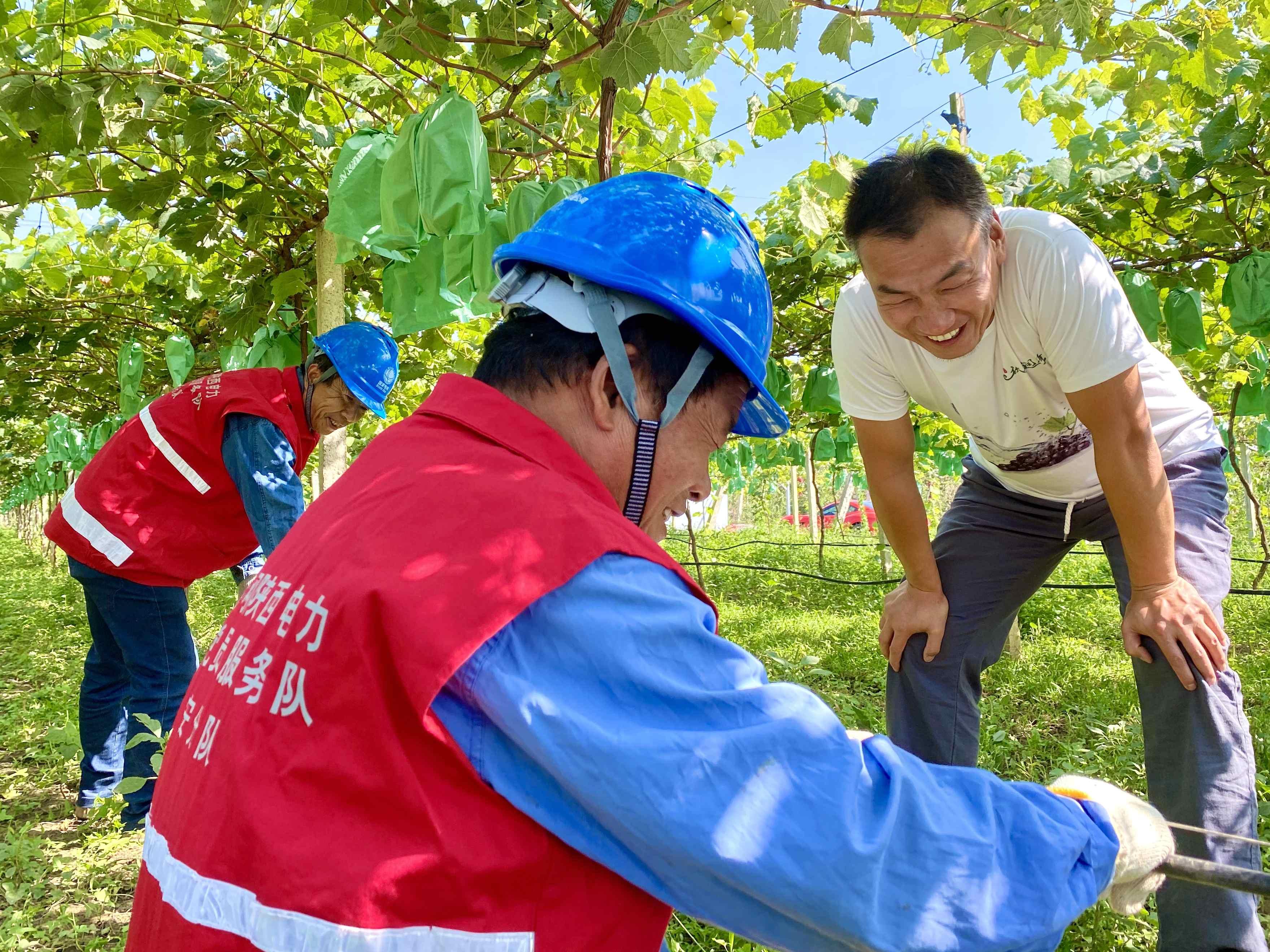 长安区供电公司:电力护航助农收