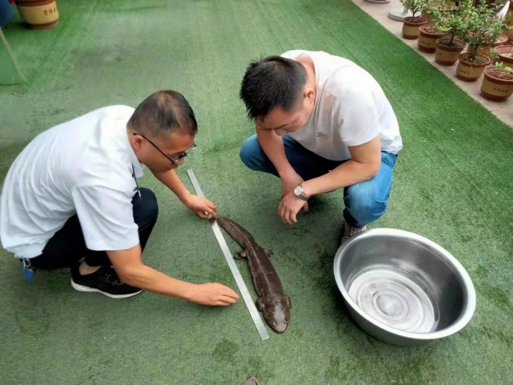 公安�邑分局巡逻民警及时救助放生一条野生娃娃鱼