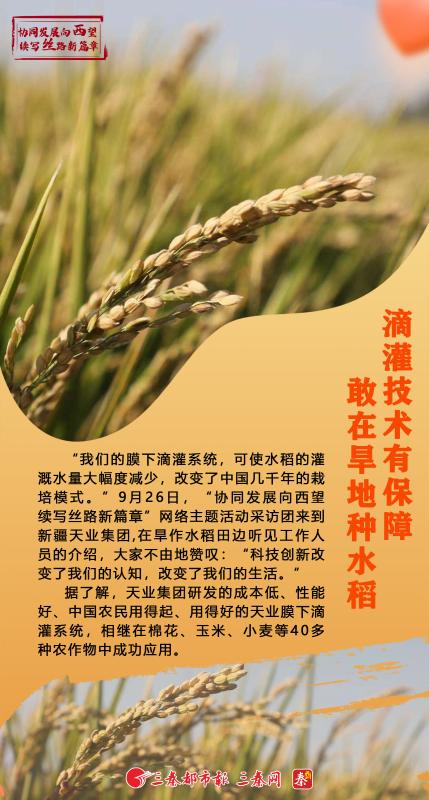 【续写丝路新篇章】滴灌技术有保障  敢在旱地种水稻