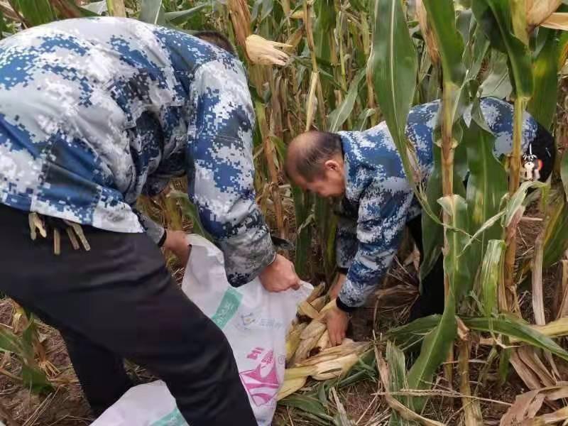 闻汛而动抢农时 干群合力保丰收武功县多措并举全力加快抢收抢种工作