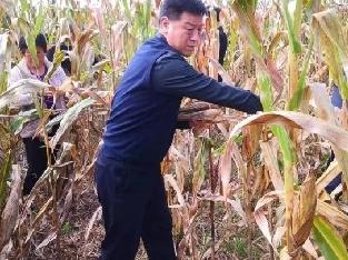 泾阳县自然资源局积极行动帮助群众抢收抢种